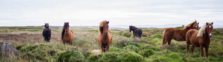 Wild horses in a field